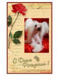Открытка С Днем рождения с китайской хохлатой собачкой