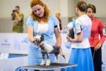 китайская хохлатая собака Ксоло Клаб Тиара Лучшей бэби Мира 2016 года