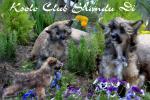 Ksolo Club Shandu Di