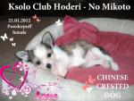 Ksolo Club Hoderi - No Mikoto