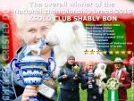 KSOLO CLUB SHABLY BON