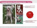 Fantastik Kashmir Pamella Queen Ksolo