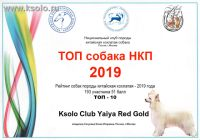 Ksolo Club Yaiya Red Gold